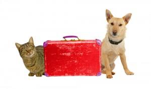 Transporte internacional de mascotas