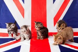 Transporte de mascotas a Reino Unido