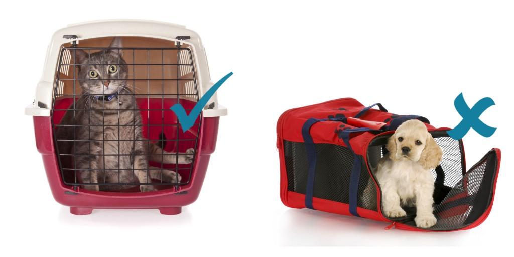 Cómo medir a tu mascota para el transporte