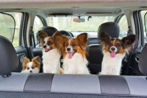 consejos para el transporte de mascotas