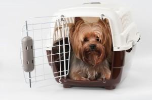 transporte-perro