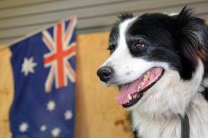 Transporte de Mascotas a Australia