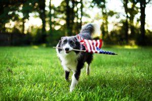 Transporte de mascotas a EEUU